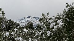 St Victoire et Oliviers (ValBlanc) Tags: snow mountain winter france victoire st olivier mediterranian
