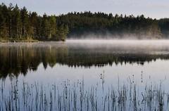 20180523-015F (m-klueber.de) Tags: 20180523015f 20180523 2018 mkbildkatalog nordeuropa skandinavien scandinavia schweden sweden sverige västergötland närke tiveden tivedennationalpark nationalpark see nebel ufer