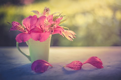 Pink and green (Ro Cafe) Tags: stilllife flowers blooms bouquet peruvianlily garden sunset pink green pastelcolours outdoors vintagelens m42 pentacon50mmf18 nikond600