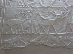 Tomb of Ptahhotep, Saqqara (Aidan McRae Thomson) Tags: saqqara tomb ancient egypt egyptian relief carving