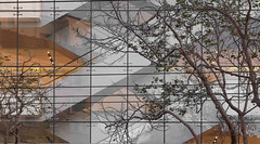 A16579 / sycamores & escalators with extra texture (janeland) Tags: california 94103 marketstreet pe016 sycamore trees escalators commercial façade window sanfrancisco january 2018 ongrey