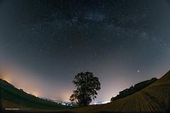 The Eye Of The Sky ... (Sam' place) Tags: tree milkyway night fujifilm xt2 nightshoot samyang