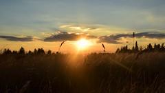 Sunset (tobystacey) Tags: sunset naturephotography natural nature natureshots naturebest photography photo orange landscapeshot landscape silhouette horizon