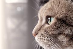 Catz Eyez (Eddy Summers) Tags: cat catsofflickr catsofinstagram cats flickrcats flickrcat gingertabby ginger gingercat eye macro pentaxaustralia pentax pentaxkp hdda35 hdda3528 hdda35macro topaz topazclarity topazbw