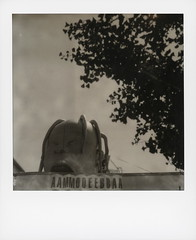 Amoeba Head (tobysx70) Tags: the impossible project tip polaroid bw blackandwhite expired instant film for sx70 type cameras impossaroid amoeba head music sunset blvd boulevard hollywood los angeles la california ca aammooeebbaa sign tree silhouette used second 2nd hand record cd tape store shop toby hancock photography