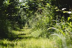 Woodland Path (oandrews) Tags: 30dayswild bramptonwood canon canon70d canonuk flora footpath nature naturereserve outdoors path plant plants track trail wildlifetrusts wildlifebcn woodland brampton england unitedkingdom gb