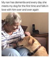 True love (Meme Genie) Tags: awesome aww dog memes wholesome