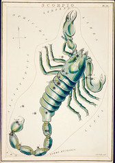 Sidney Hall's (?-1831) astronomical chart illustration of the Scorpio. Original from Library of Congress. Digitally enhanced by rawpixel. (Free Public Domain Illustrations by rawpixel) Tags: aerostatique antique art arthropod arts astrological astrology astronomical astronomy celestial chart chelicerata constellations drawing etchings greek hall handcolored horoscope illustrated illustration locimage magical map mythical mythological name november october old paints poison scorpio scorpion sidney sidneyhall sketch stars vintage zodiac
