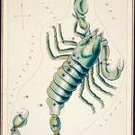 Sidney Hall's (?-1831) astronomical chart illustration of the Scorpio. Original from Library of Congress. Digitally enhanced by rawpixel. thumbnail