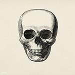 Vintage llustration of skull published in 1843 by John Lloyd Stephens (1805-1852). thumbnail