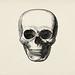 Vintage llustration of skull published in 1843 by John Lloyd Stephens (1805-1852).