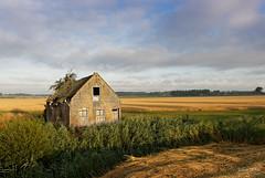 Lost Dreams (Johan Konz) Tags: house abandoned field sky shadow outdoor landscape nikon d7500 dirksland goereeoverflakkee zeeland netherlands reed tree brickwork brik door window roof