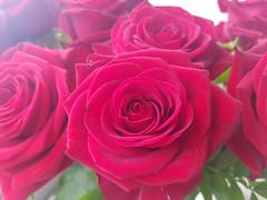 Beautiful rose. 🌹 Amazing red. (Urbex_Chroma) Tags: rose red blumenstraus flower rot beautiful