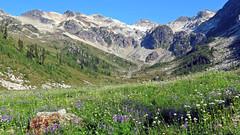 Mountain in Sight (21mickrange) Tags: brandywine brandywinemtn coastmountains squamishcheakamusdivide squamishvalley cheakamusvalley whistler squamish britishcolumbia meadows mountain alpine flowers landscape