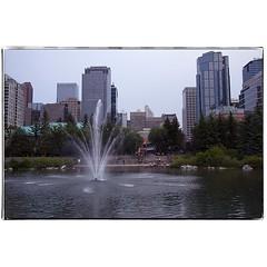 Fountain and skyline . #photography #photooftheday #photoadaychallenge #canon7d #canon1022 #city #pond #fountain #skyline #downtown #project365 #yyc #calgary (PSKornak) Tags: photography photooftheday photoadaychallenge canon7d canon1022 city pond fountain skyline downtown project365 yyc calgary
