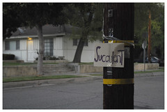 Pasadena_0714 (Thomas Willard) Tags: sign placard street pole dusk pasadena california succulent