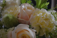 DSC_0084 (sxcxxhx) Tags: japan osaka kyoto hydrangea flower trip voyage 日本 大阪 京都 旅行