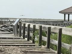 Ocean Springs, Mississippi (Patrice Roe) Tags: oceansprings mississippi gulf davisbayouarea gulfislandsnationalseashore gulfofmexico dock ruins abandoned roadtrip2018
