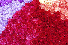 Imperial bouquet. Red. (fedoseenko) Tags: санктпетербург flower россия цветок blossom floret bloom красота flowering colour цветение inflorescence природа nature beauty blissful loveliness beautiful saintpetersburg sunny art shine dazzling light russia day garden tree blue white голубой небо лазурный color green sky park trees pretty sun pink bouquet букет exhibition colours pavlovsk pavlovskpark mood summer tsar outdoors palace