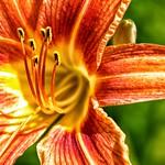 Toronto Ontario ~ Canada ~ Edwards Gardens ~ Botanical Garden ~  Macro Stamen thumbnail