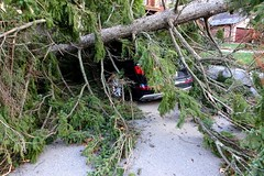 June wind storm 2018 (posterboy2007) Tags: car tree wind toronto