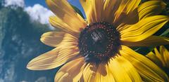 Sommer (CA_Rotwang) Tags: summer sommer bochum garden garten blumen flowers pflanzen