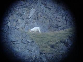 Alaska Dall Sheep Hunt & Moose Hunt 37