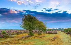 Cloudy Later (nicklucas2) Tags: landscape newforest cloud heather tree