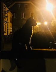 Neko (°Nina°) Tags: night nacht ruhrgebiet mülheim katze katzen cats cat