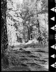 About the roots in the Photography... (Listenwave Photography) Tags: k4b 1939 czj tessar rolleiflexautomat filmphotography blackandwhite basephotography roots abouttherootsinthephoto bw light listenwave
