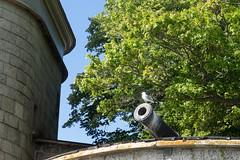 Friedenstaube (KL57Foto) Tags: 2018 juli july kl57foto omdem1 olympus schweden sommer summer sverige sweden schären schäreninsel schärengarten archipelago festung waxholm vaxön fortress taube kanone