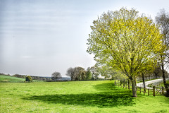 A Summer Day (jamesromanl17) Tags: tree fence cultivatedland field copse grass boulevard ruralscene lawn meadow landscape landscapes sunlight sun summer light warm cheshire england britain uk countryside rural colorful colour shadow shadows contrast sunny fields