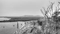 (mahler9) Tags: bw october 2017 jaym provincetown capecod moors marsh wetland