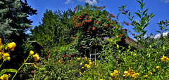 GERMANY , Botanischer Garten am Schloss Hohenheim , 76476/10491 (roba66) Tags: hohenheim blumen blüten fleur flori flor flora flores bloem plants pflanzen colores color colour coleur roba66 nature natur naturalezza garten garden jardin giardini park baum