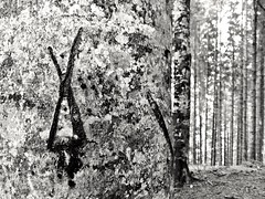 Forest (Cosentino Aran) Tags: forest cansiglio veneto italy wood nature tree