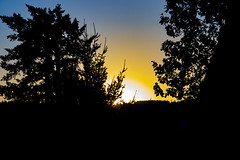 2018-07-21 Sunset in silhouette (Mary Wardell) Tags: sunset silhouette trees salem oregon summer canon80d