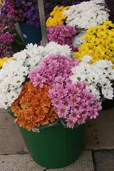 flowers (Jusotil_1943) Tags: flores cubo plastico colores