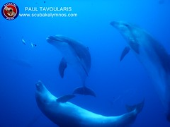 "Kalymnos Diving - Dolphins • <a style=""font-size:0.8em;"" href=""http://www.flickr.com/photos/150652762@N02/42021234390/"" target=""_blank"">View on Flickr</a>"