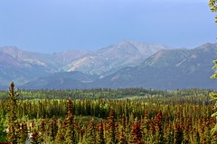 Thunderstorm approaching (AnetteWho) Tags: alaska landscape light green mountain tree badweather nature