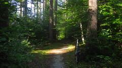 trail (Automatikman) Tags: 0415mw bike biketour mtb salzburg austria österreich flachgau winterbike winterradl 20 bergziege