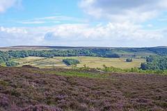 Over Owler Tor , looking towards Longshaw (sheffielder3) Tags: derbyshire overowlertor foxhouse hathersage heather nikon50mm18g nikond800