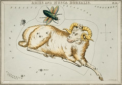 Sidney Hall's (1831) astronomical chart illustration of Aries and Musca Borealis. Original from Library of Congress. Digitally enhanced by rawpixel. (Free Public Domain Illustrations by rawpixel) Tags: aerostatique antique aries art arts astrological astronomy book borealis chart constellations drawing etchings flies fly goat hall handcolored illustrated illustration locimage magical musca mythological name old paints ram sheep sidney sidneyhall sketch stars vintage zodiac