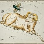 Sidney Hall's (1831) astronomical chart illustration of Aries and Musca Borealis. Original from Library of Congress. Digitally enhanced by rawpixel. thumbnail