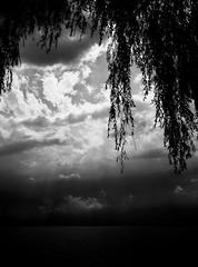 Baisser le rideau... (Sabine-Barras) Tags: suisse switzerland monochrome blackandwhite bnw bw water eau lake lac sky ciel clouds nuages landscape paysage tree arbre dark sunset