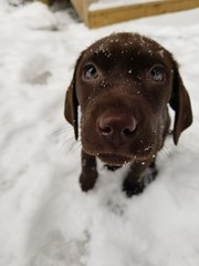 Jacksie girl in the snow! (sandiagadeni) Tags: dog puppy cute puppies