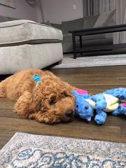 Ginger's sweet Finn!