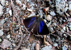 a strange and beautiful being (lualba) Tags: natur tier animal moth motte nature