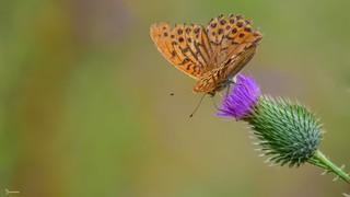Butterfly - 5731