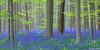 Forêt de Hal - Belgique (chassamax) Tags: 1x2 belgique belgium bleu blue bois boisdehal canon6d color couleurs europe fleur forest foret formatpaysage green hal hallerbos jacinthes landscape lupin matin maxence maxenceboyer maxenceboyerphoto morning natur nature paysage printemps sousbois spring sunrise vert