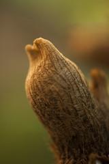 Broto de samambaia (Gigica Machado) Tags: nature natur natureza naturelovers naturaleza natura samambaia fern